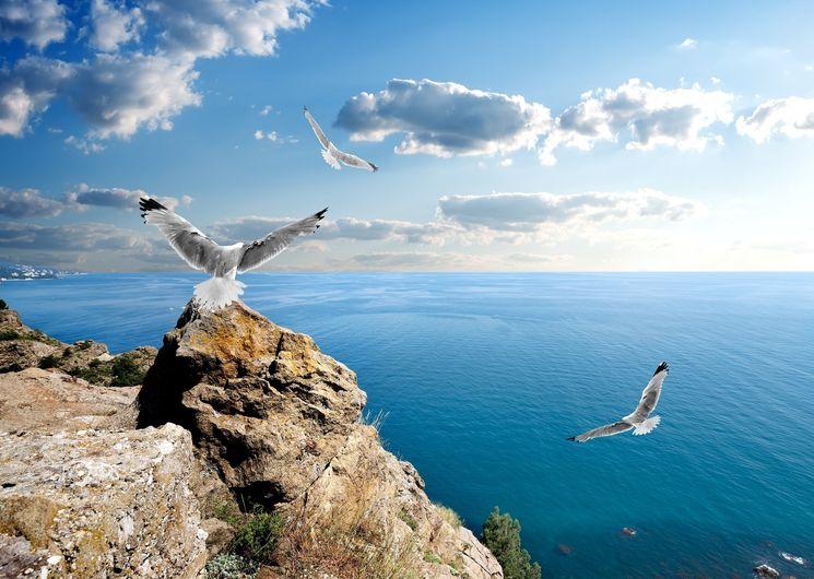 Свободная экономическая зона в Крыму