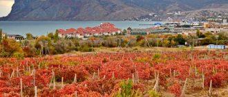 Винный туризм в Крыму