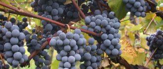 Винодельческие ресурсы Крыма